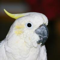 Roni 21.9.1999-26.8.2009