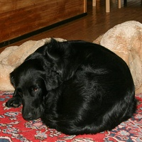 8.12.2007